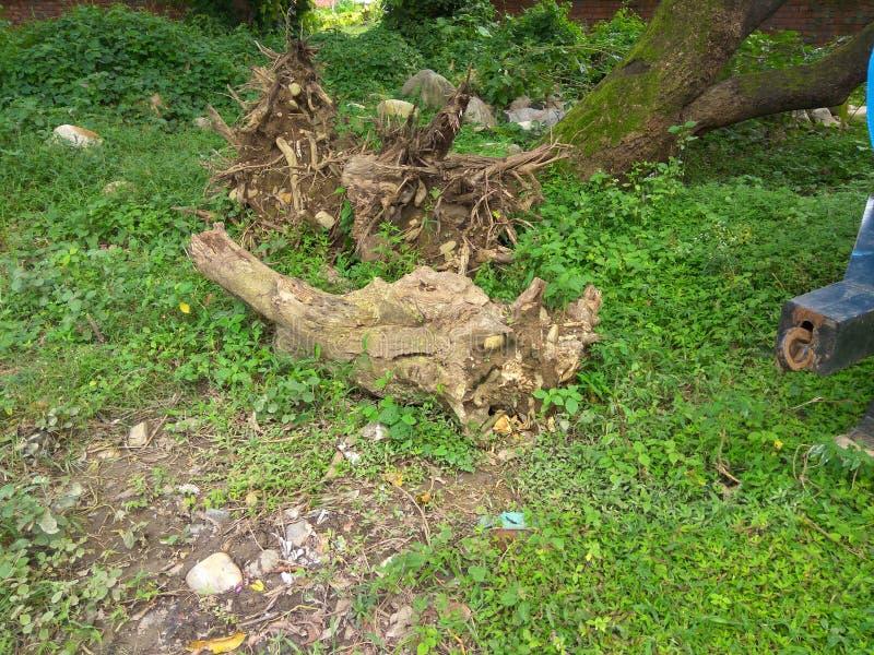 Raiz inoperante da árvore imagem de stock royalty free