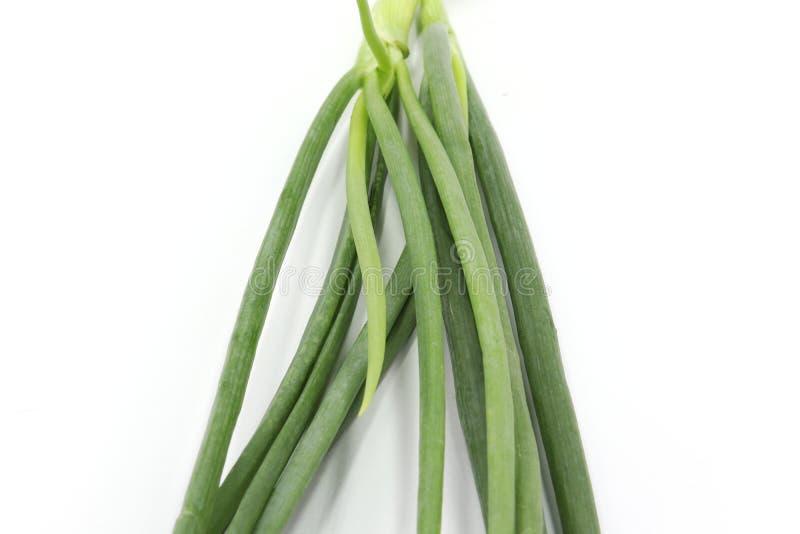 Raiz inteira do pacote da cebola da salada da cebola da mola da cebola verde da chalota no fundo branco fotografia de stock