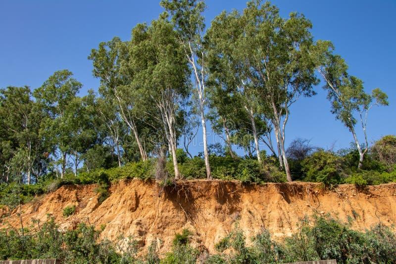Raizes abertas das árvores devido aos corrimentos, erosão do solo, após o corte da estrada imagens de stock royalty free