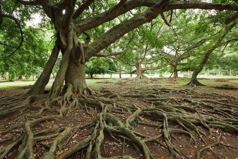 Raizes da árvore imagens de stock royalty free