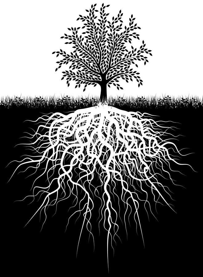 Raizes da árvore ilustração stock
