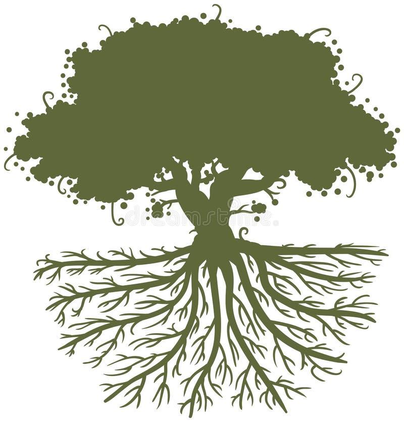 Raizes da árvore de carvalho ilustração do vetor