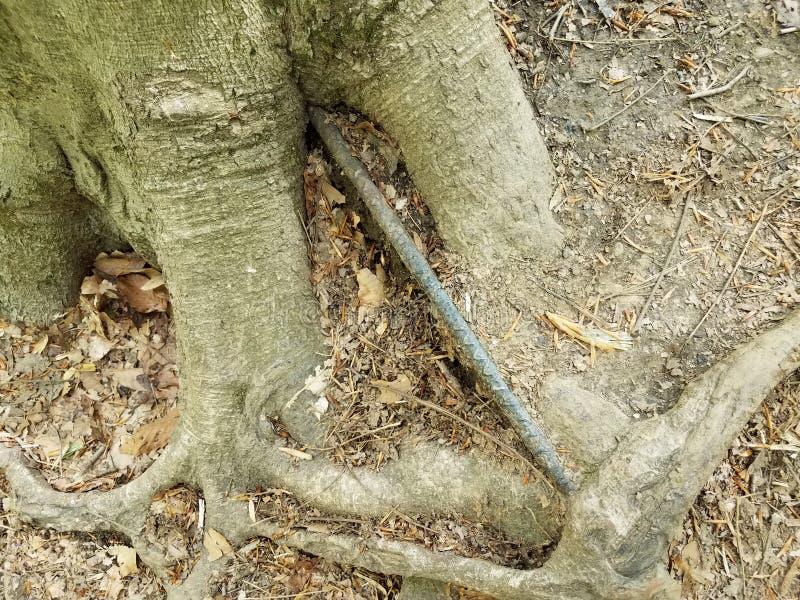 Raizes da árvore e casca e barra e sujeira de metal fotos de stock royalty free