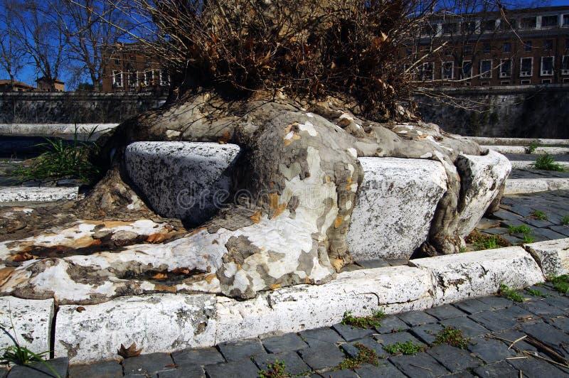 Raizes da árvore em Roma foto de stock royalty free