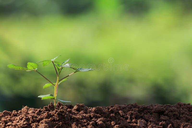 Raizes da semente da planta nova imagens de stock royalty free