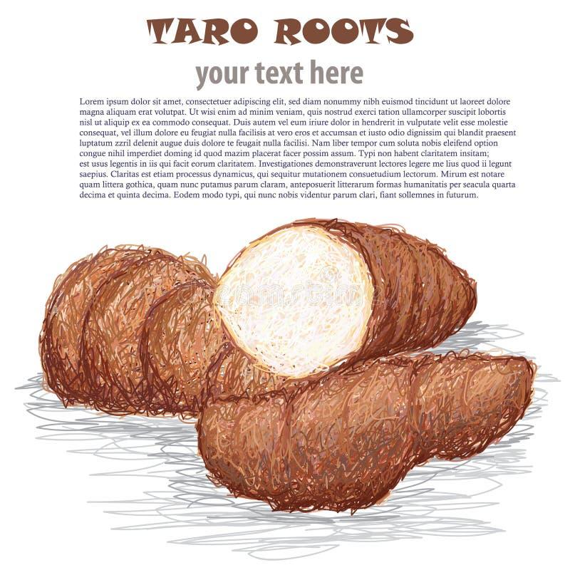 Raizes de Taro ilustração royalty free