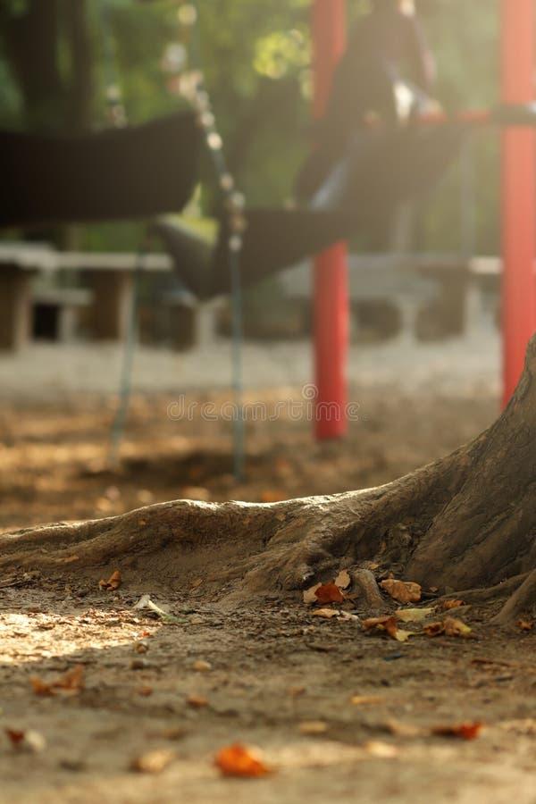 raizes de uma árvore velha que está em um plyground para crianças de uma escola primária na luz ensolarada brilhante fotos de stock