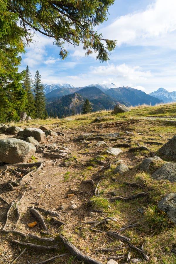 Raizes no prado com vista em montanhas de Tatra, Polônia imagens de stock royalty free