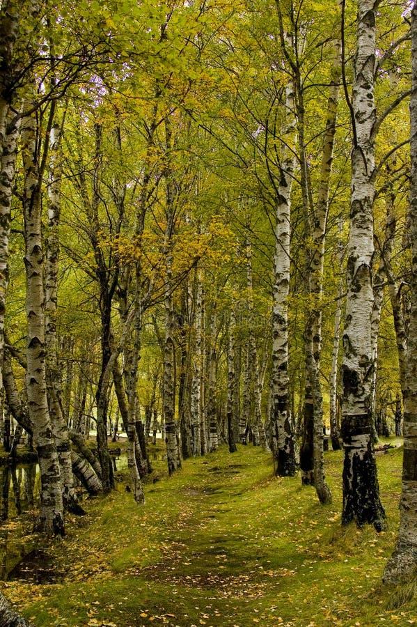raj leśna ścieżki fotografia royalty free