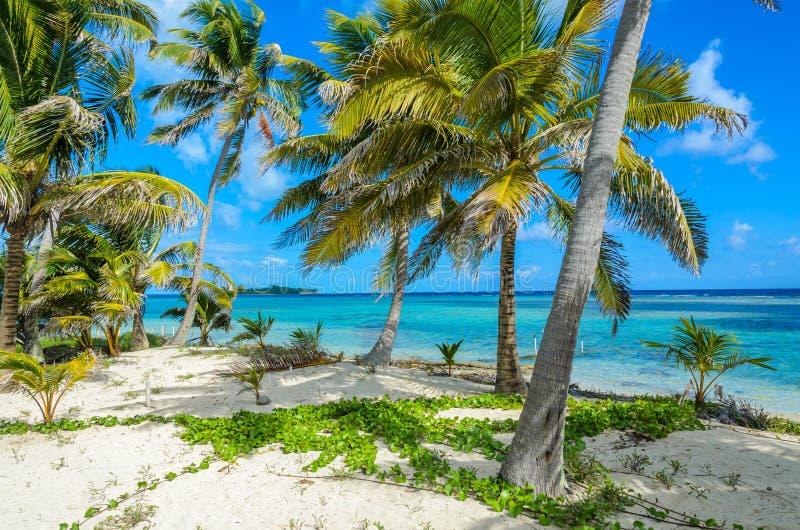 Raj plaża na wyspy caye Carrie łęku Cay pola stacji, morze karaibskie, Belize tropikalny przeznaczenia obrazy stock
