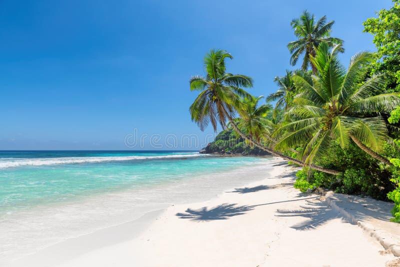 Raj plażowe i Kokosowe palmy obraz stock