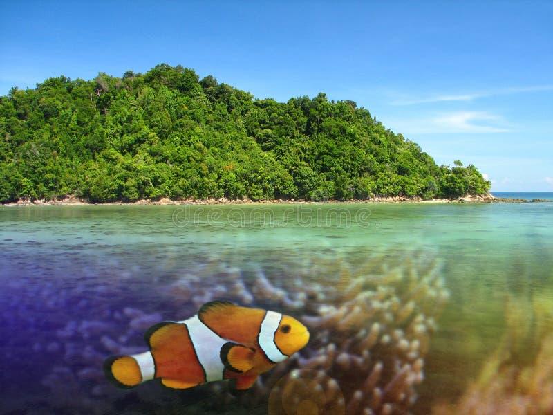 raj tropikalny fotografia royalty free
