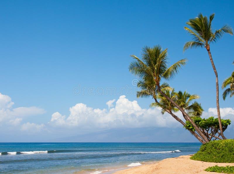 raj tropikalny obraz royalty free