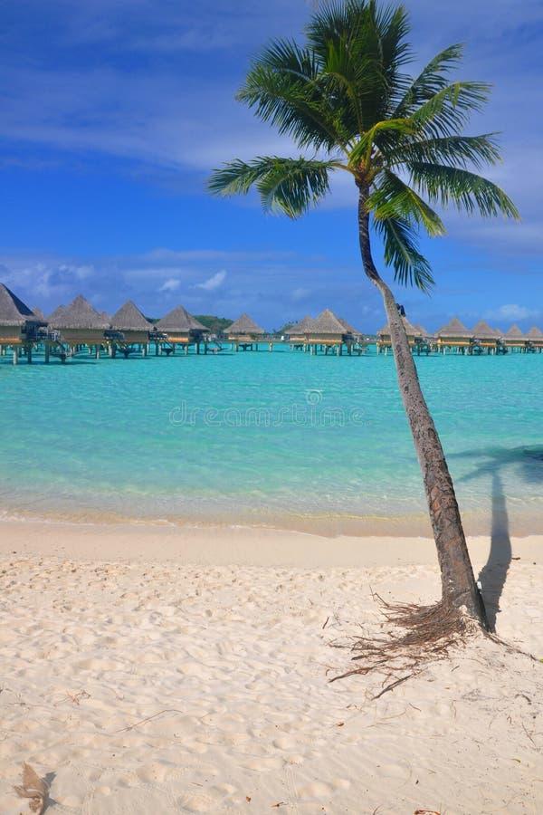 raj tropikalny zdjęcia royalty free