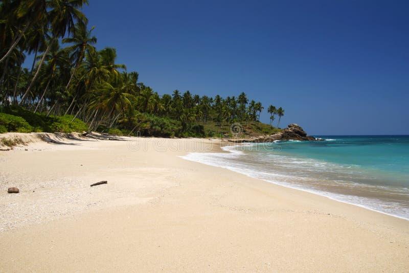raj tropikalny obrazy royalty free