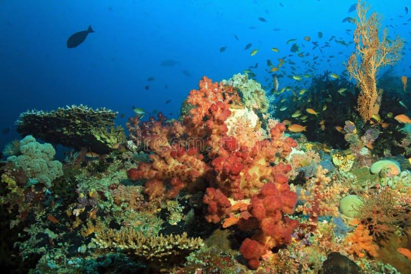 Raja Ampat Coral Reef. Colorful Coral Reef against Blue Water. Dampier Strait, Raja Ampat, Indonesia stock photos