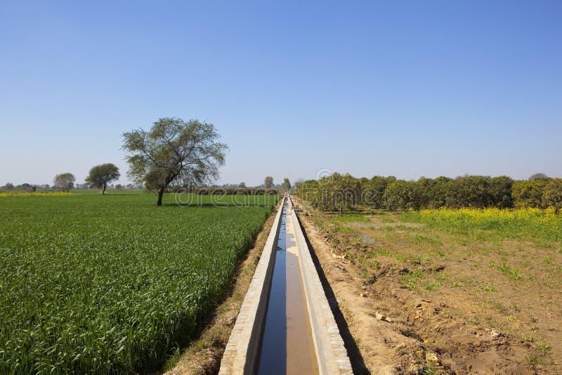 Rajasthan jordbruksmark med bevattningkanalen royaltyfri foto