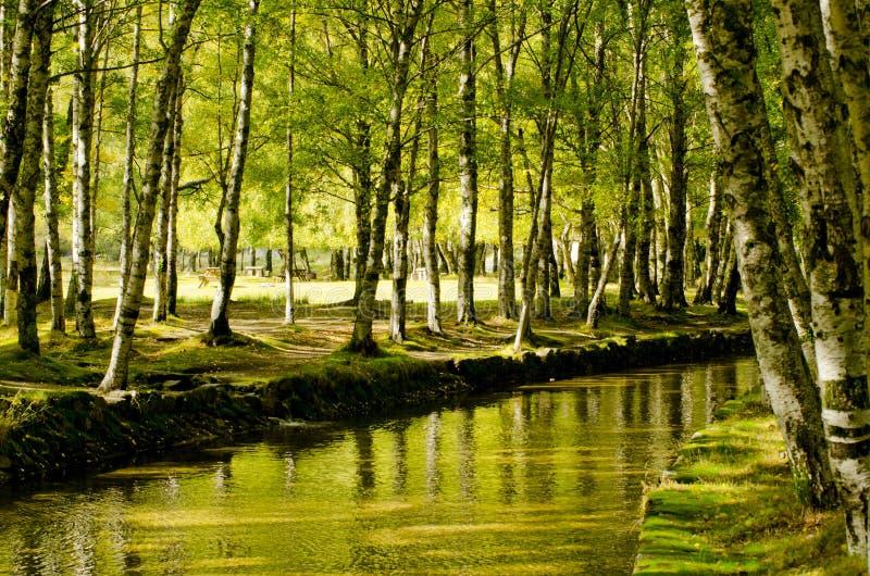 Raju lasu rzeka obraz royalty free