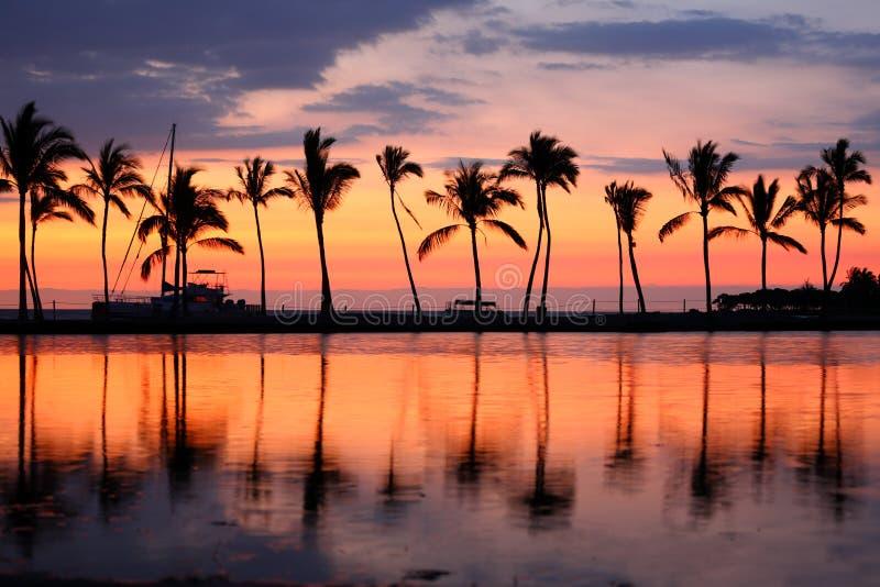 Raju plażowego zmierzchu tropikalni drzewka palmowe