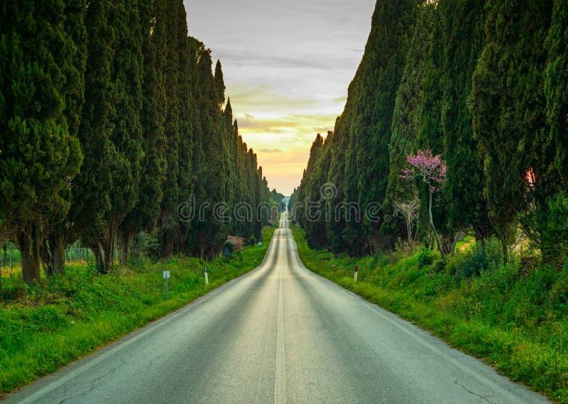 Rak boulevard för Bolgheri berömd cypressträd på solnedgång. Mars royaltyfri foto