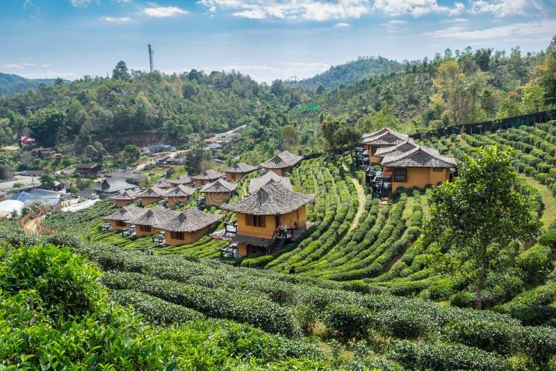 Rak d'interdiction de vin de lie de station de vacances de point de vue thaïlandais dans la plantation de thé photos libres de droits