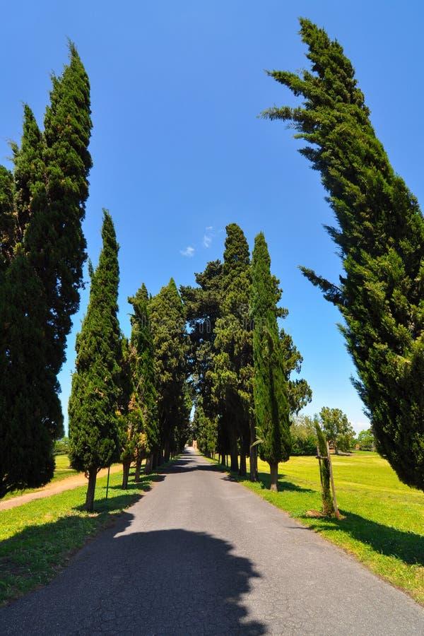 Rak enkel grändväg med att försvinna punkt mellan rader av högväxta cypressträd i bygden av Italien arkivbilder