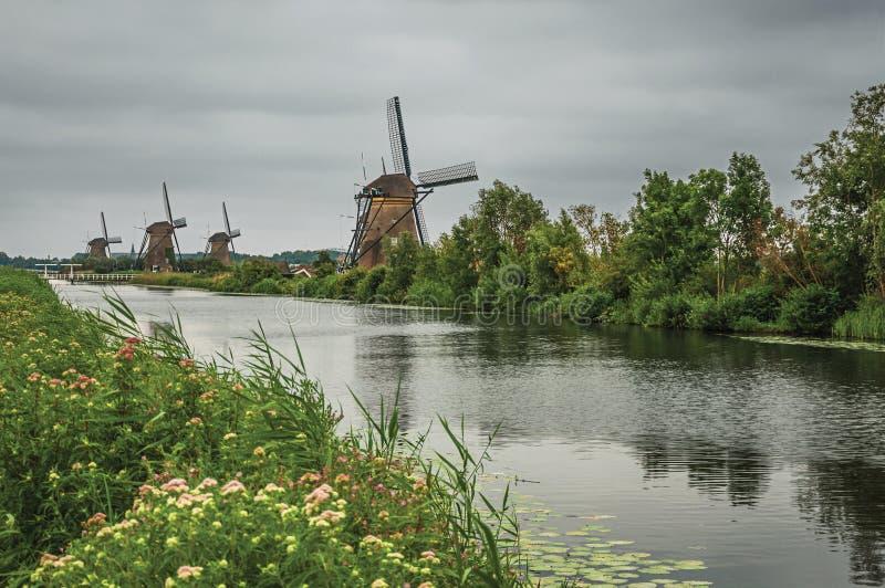 Rak kanal med blommiga buskar och väderkvarnar på banken i en molnig dag på Kinderdijk fotografering för bildbyråer