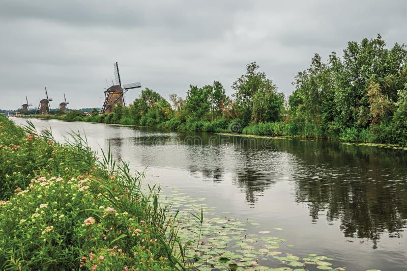 Rak kanal med blommiga buskar och väderkvarnar på banken i en molnig dag på Kinderdijk royaltyfria foton