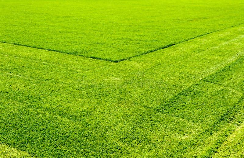 Rakat gräs för gräs gräsmatta arkivbilder