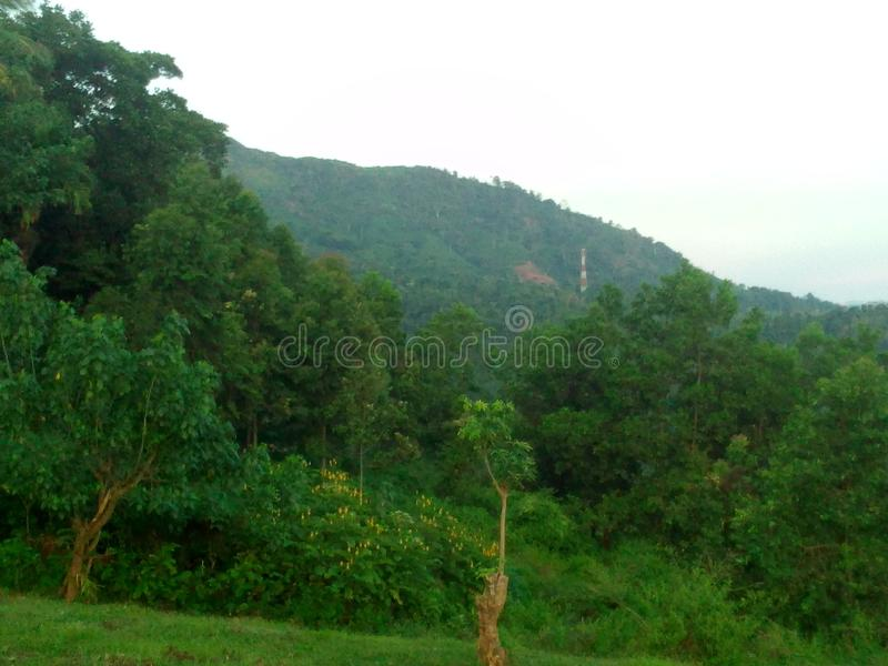 Rakawanaregenwoud, Sri Lanka royalty-vrije stock fotografie