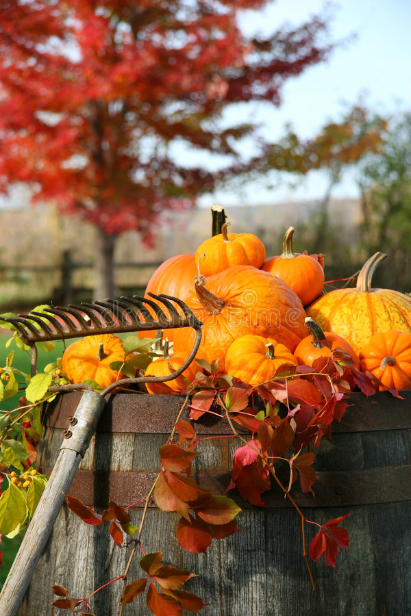 Free Rake And Pumpkins Stock Images - 3409394
