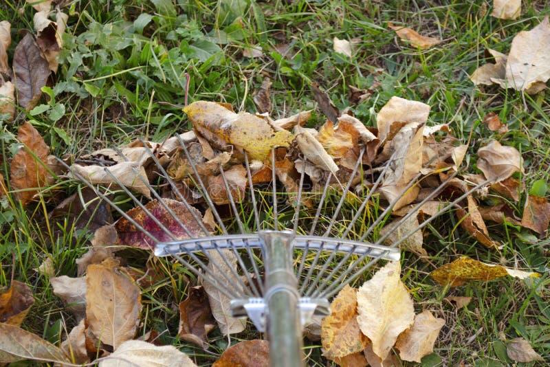 Rake bredvid en hög av fallna höstblad på gröngräs närhet Att göra höstnedfallna blad med en rak Cirkel av royaltyfri foto