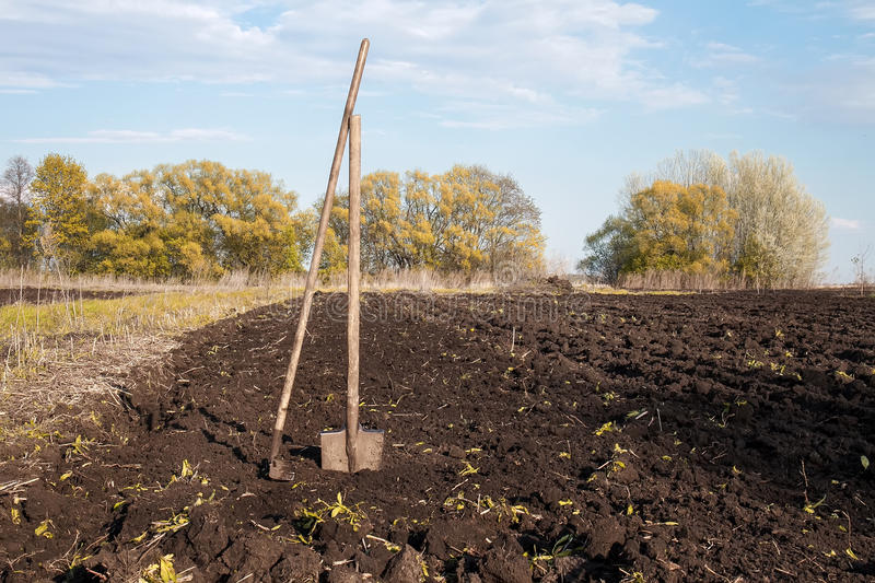Rake and shovel in a plowed field and dug earth in the garden. The old rake and shovel in a plowed field and dug earth in the garden royalty free stock photography