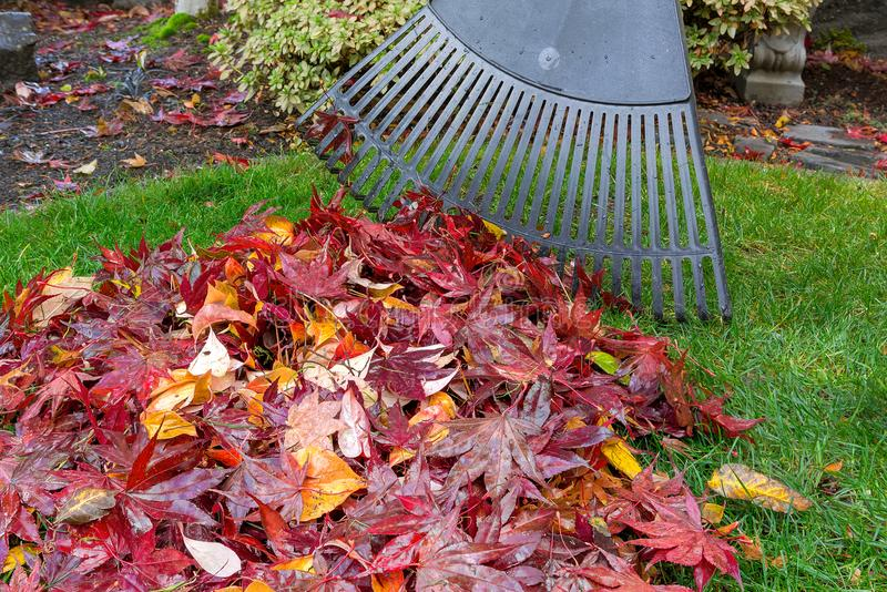 Raking Fall Leaves in Garden Yard autumn season stock photo