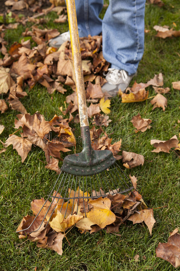 Download Raking Leaves stock photo. Image of clean, autumn, grass - 27936852