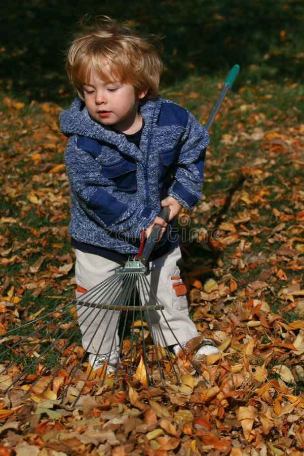Download Raking Leaves stock photo. Image of male, jacket, pull - 303224