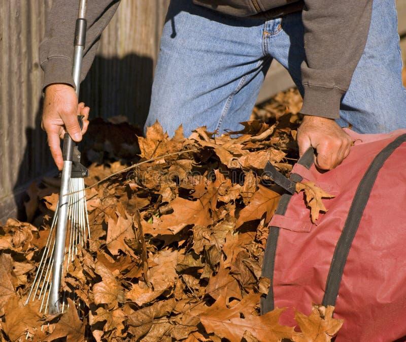 Download Raking Leaves stock photo. Image of help, clean, working - 7175784