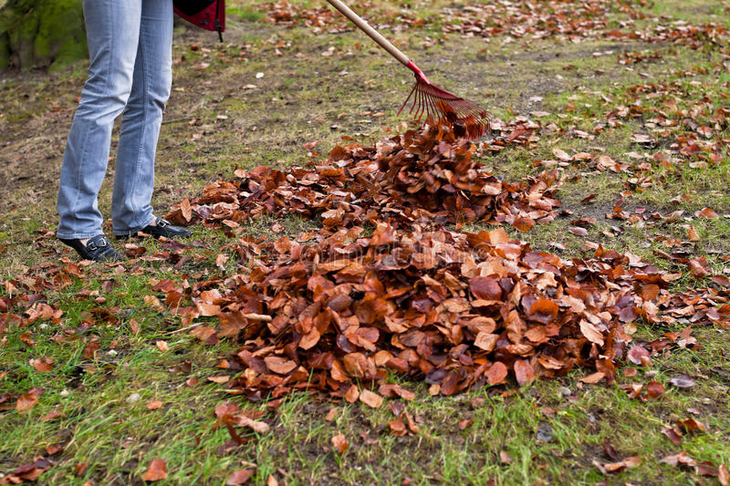 Download Raking Leaves. Remove Leaves. Stock Photography - Image: 17335432