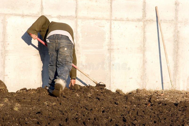 Raking the soil royalty free stock image