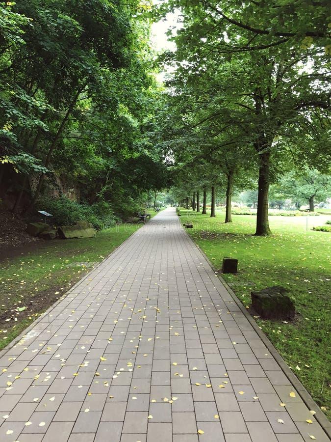 Raksträckan stenlade gångbanan i stads- sommar parkerar royaltyfria bilder