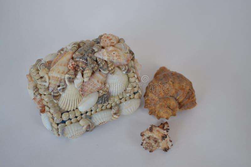 Rakushka, shell do mar, caixão, fuzileiro naval, arranjo foto de stock