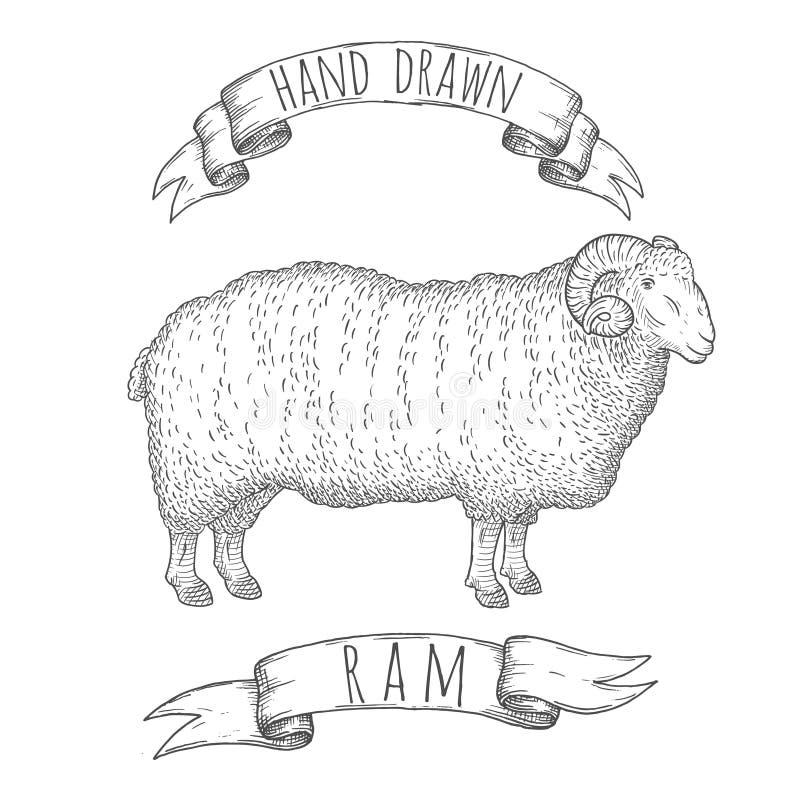 Ram手拉的例证 库存例证