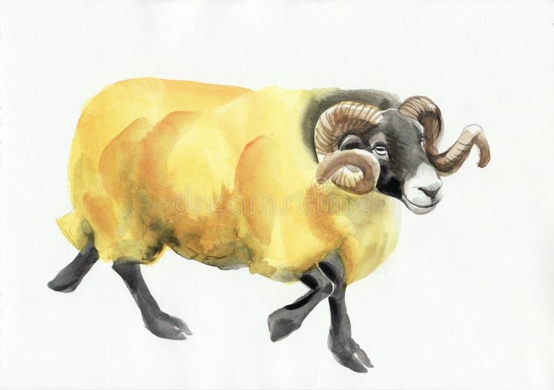Ram水彩绘画 向量例证