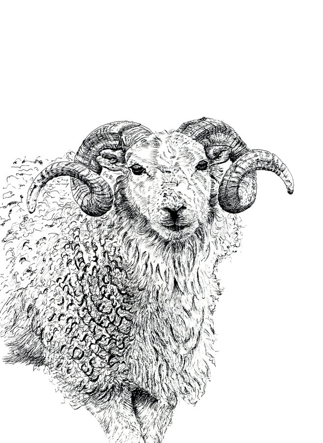 Download The Ram stock illustration. Image of astrological, masculine - 507529