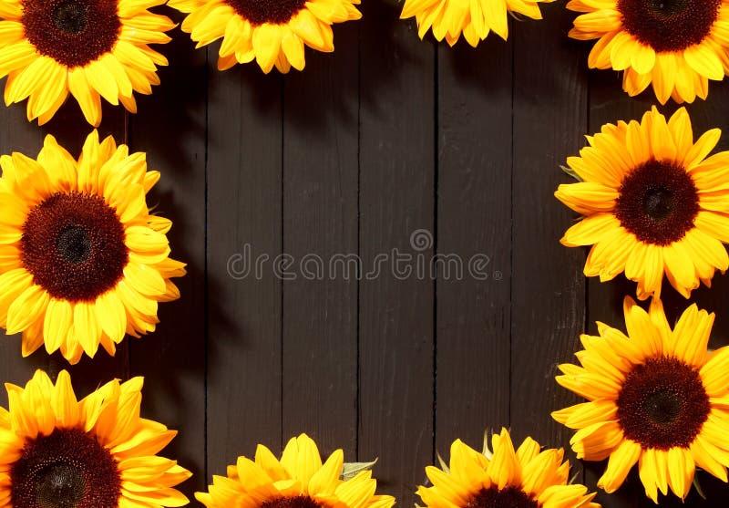 Ram av färgrika gula solrosor arkivfoto
