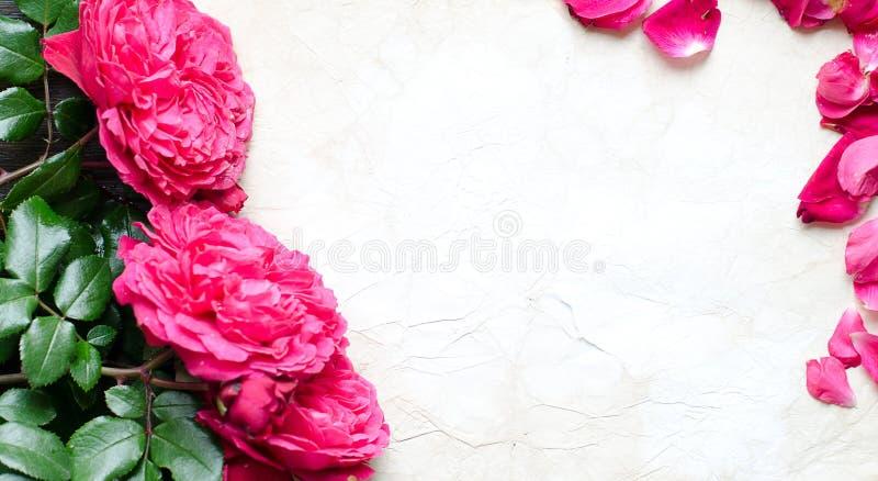 Ram av nya rosor fotografering för bildbyråer