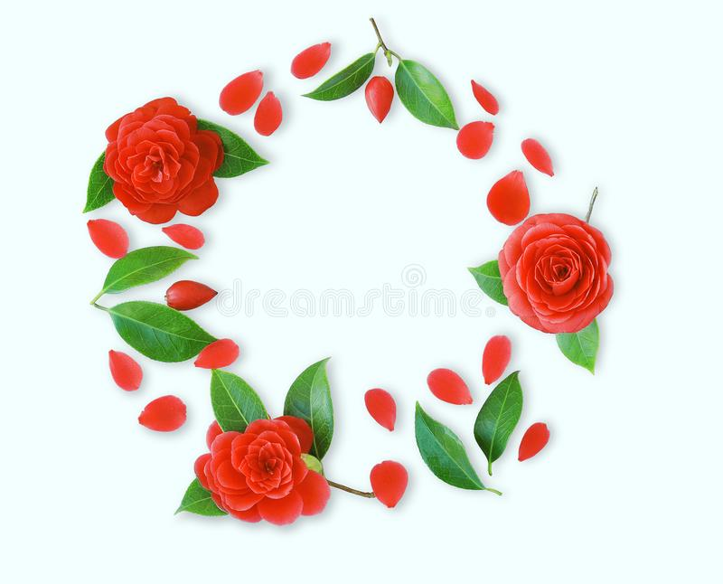 Ram av röda kameliablommor, sidor och röda kronblad på ljus cy royaltyfria foton