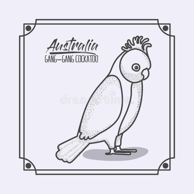 Ram för Australien liga-liga kakadua i monokrom kontur vektor illustrationer