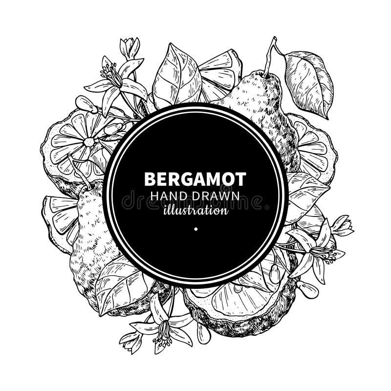 Ram för Bergamotvektorteckning Isolerad tappningmall av cit stock illustrationer