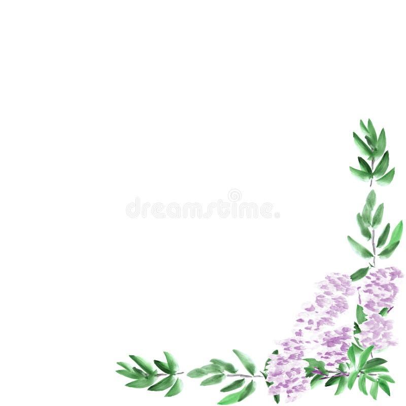 Ram med den violetta blomman för grön lövverk och för blommande vår på en vit bakgrund vattenfärg vektor illustrationer